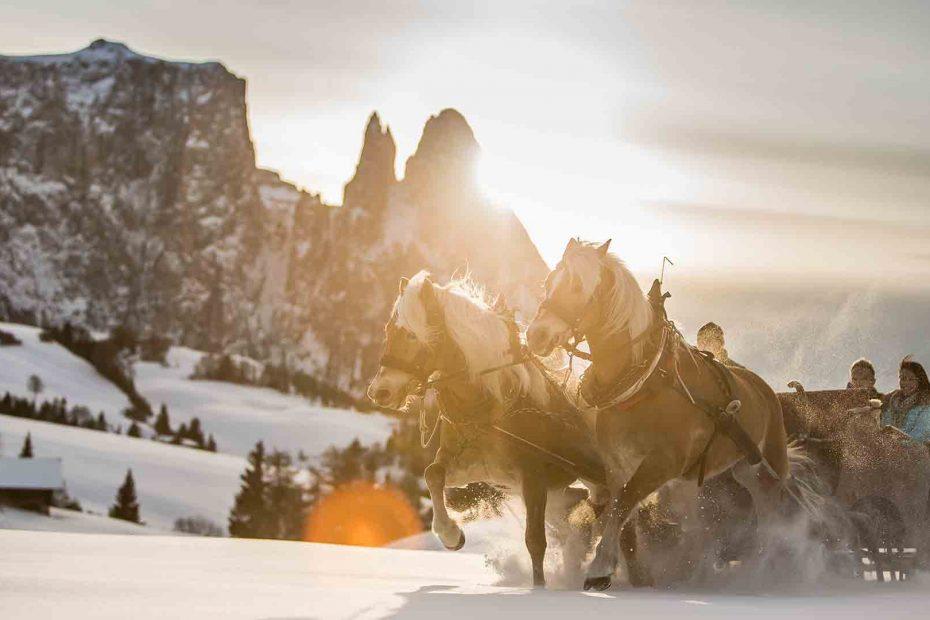Pferdekutschen-winter